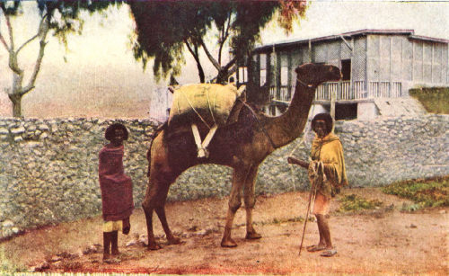 Camel Transport Between Harar and Dire-Daoua, Abyssinia