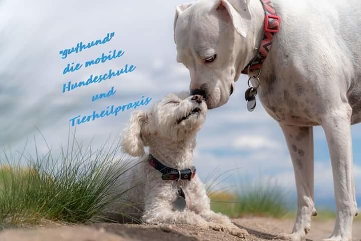 Mobile Tierheilpraxis Und Hundeschule Jetzt Anrufen 01577 4630542