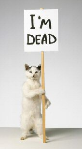 Image result for dead cat funny