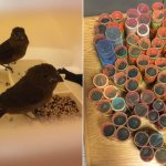 Guyanese man nabbed with 70 live finches in hair rollers at JFK