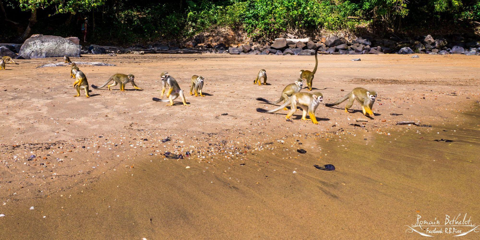 Résultats de recherche d'images pour «ilet la mere guyane»
