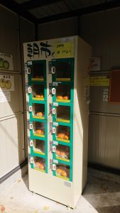 Vending machine for Japanese persimmons