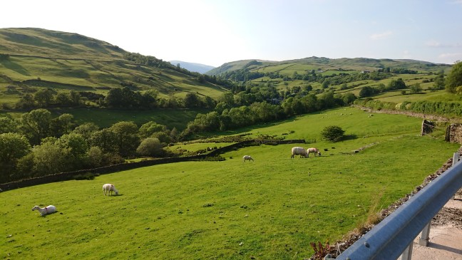 Hilly English countryside with sheep