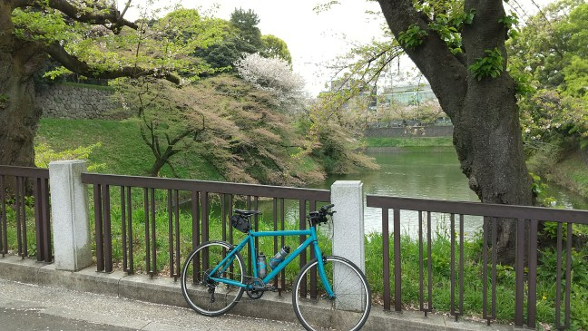 Bicycle in front of moat with fading cherry blossoms