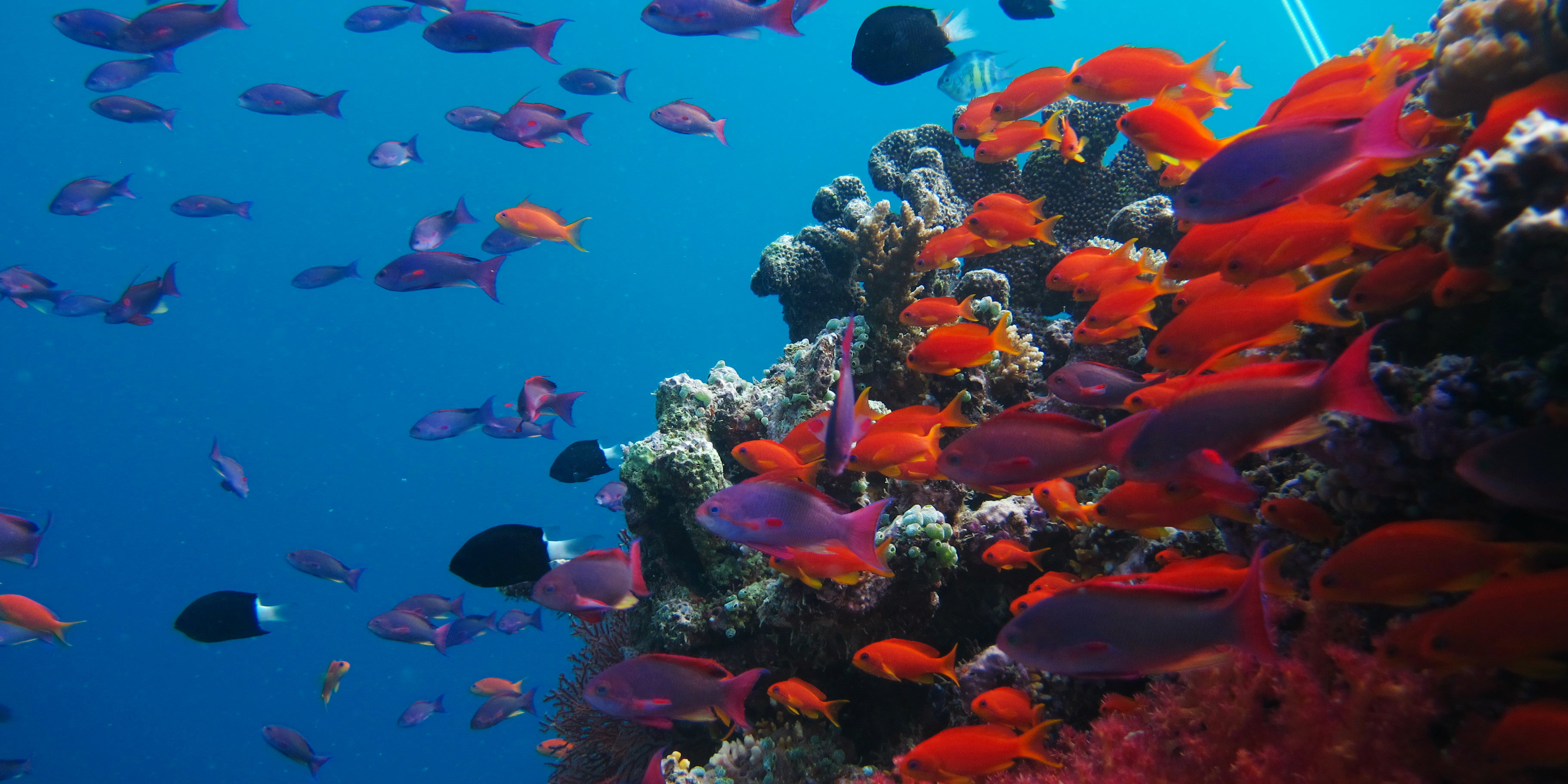 Five Coral Reef Facts To Know Before Volunteering In