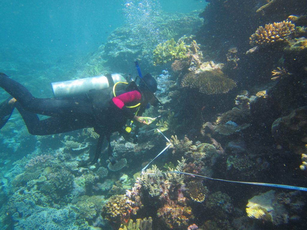 Fiji Coral Reef Ecology And Conservation Short Term