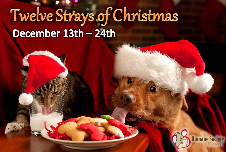 Twelve Strays Of Christmas The Humane Society Of Greenwood