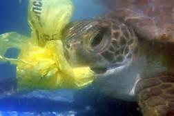 turtle plastic