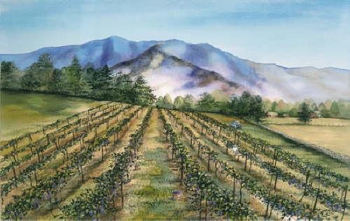 Morning Glory Vineyard