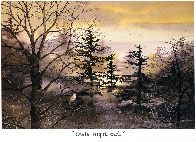 Owl's Night Out