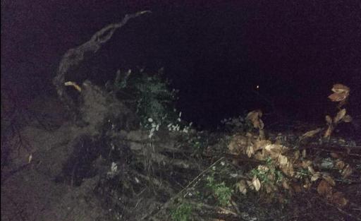 """Frana albero località """"Serruni"""" Sp 269 Tra Santa Barbara di Ceraso e Mandia"""