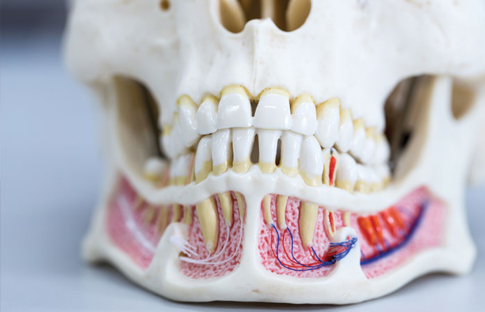 dental anatomy class dental assistant