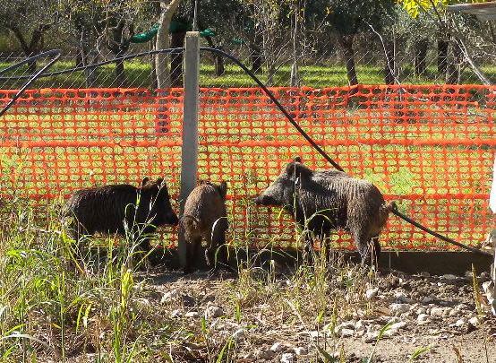 CILENTO – Caccia e fauna, due persone denunciate nel Parco