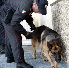 CILENTO – Blitz antidroga, 11 arresti