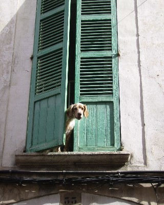 Photo: Dog in Soller, Mallorca, Balearic Islands, Spain. Credit: Lisa Borre.