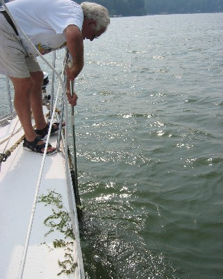 Photo: David removes nuisance weeds from the anchor after spending a night in Little Sodus Bay, Lake Ontario.  Credit: L. Borre.