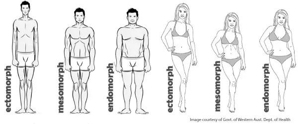 kroppstyp gymlivet