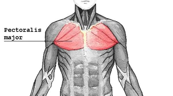 bröst bröstövningar
