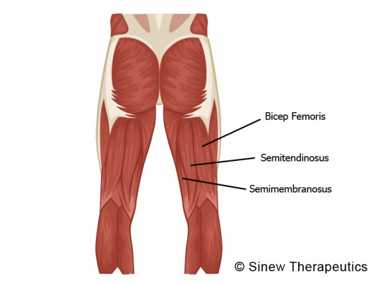muskler benövningar