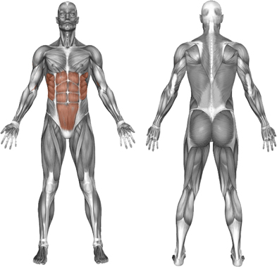 hängande benlyft muskler tränade