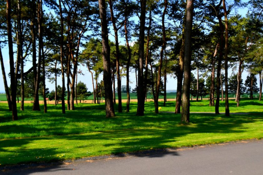 vimy-forest-1