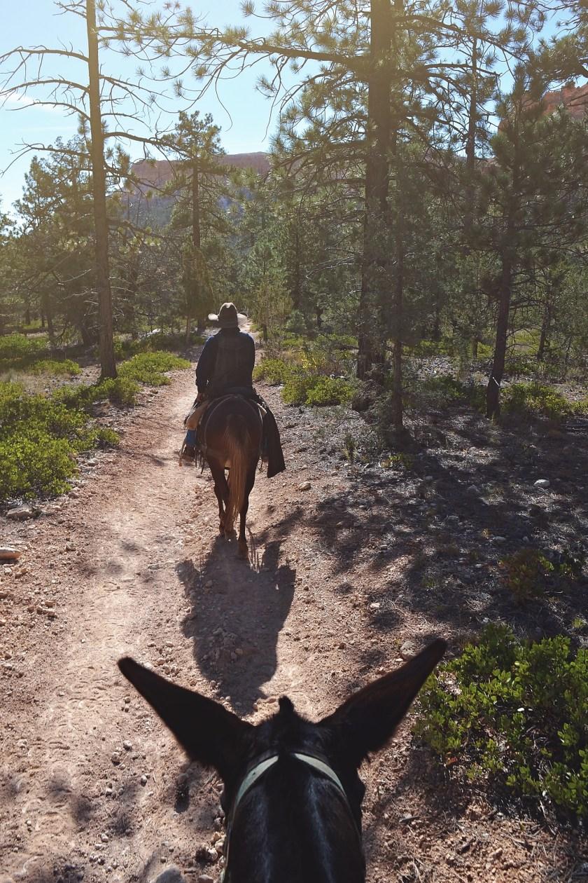 bryce-canyon-trail-riding-4