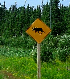 https://i2.wp.com/www.gypsynester.com/ontario-moose-crossing.jpg