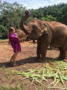 Rachel feeding an elephant at Patara elephant farm
