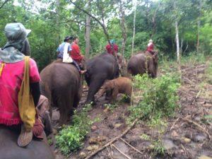 Riding elephants at Patara elephant farm