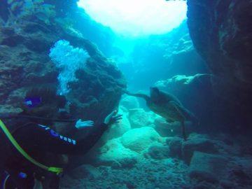 Rachel and a turtle diving in Kauai