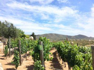 vinas de garza vineyards