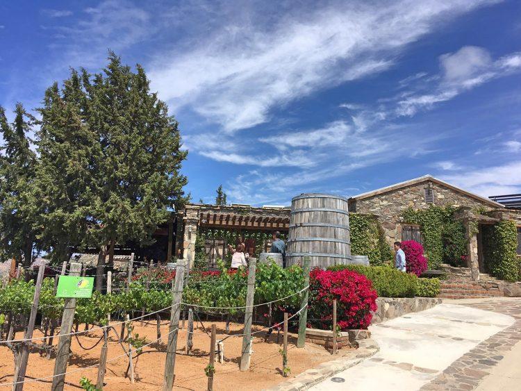 vinas de garza winery