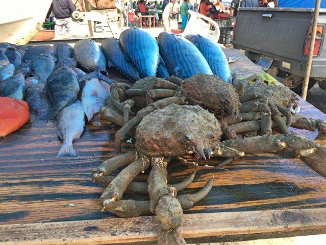 Stone crabs for sale in Popotla