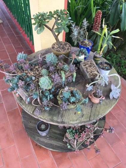 succulents salento