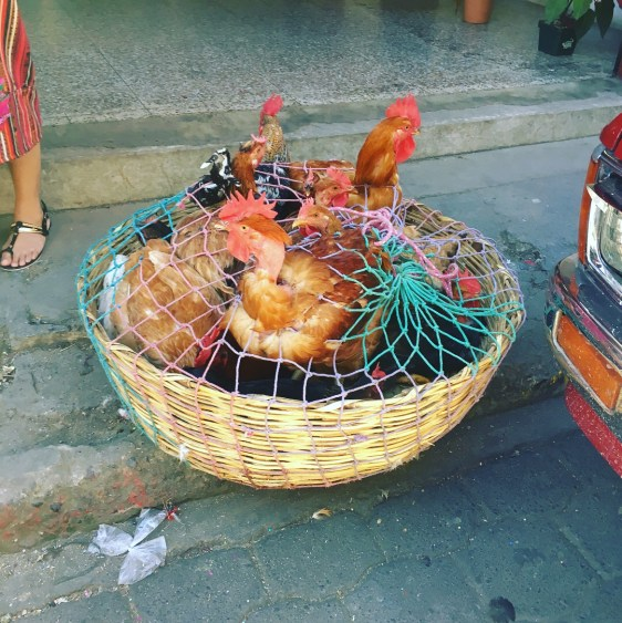 chickens at chichi. market