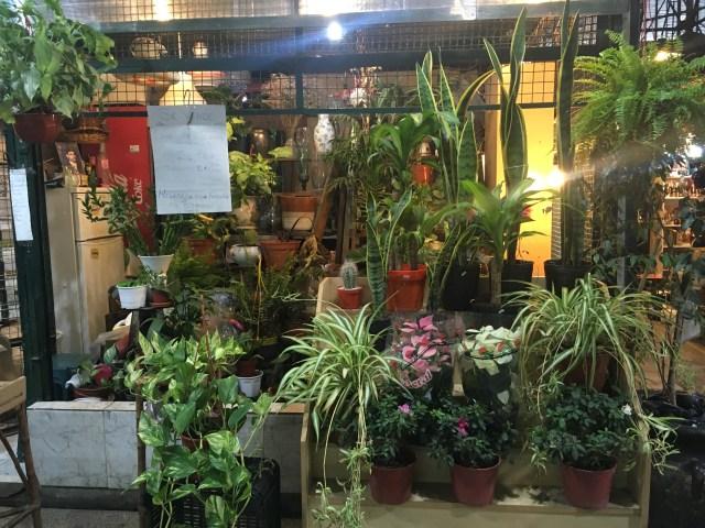 indoor market san telmo