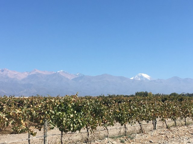a view from South America Wine tasting