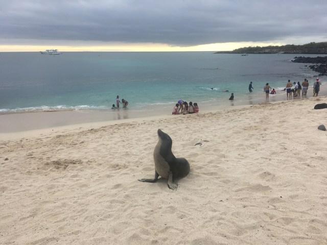 beach in galapagos