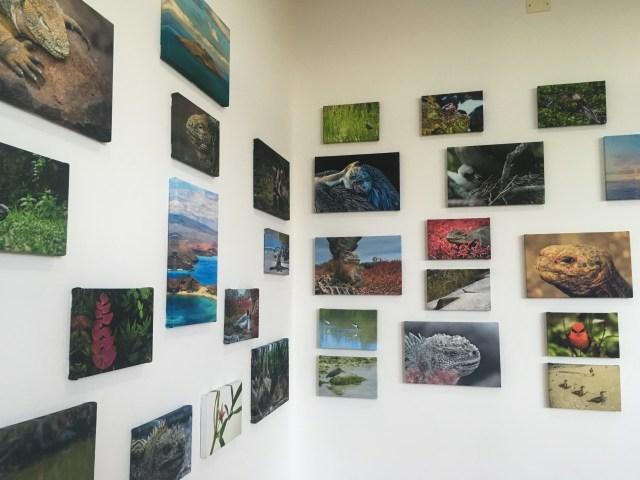 galapagos museum