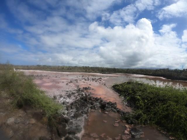 galapagos salt flat
