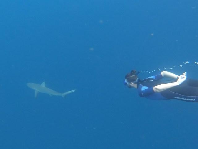 kicker rock shark_