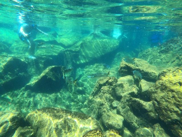 las grietas fish