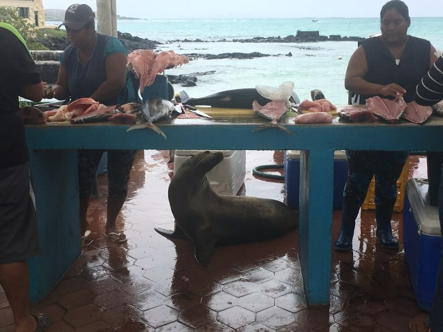 santa cruz fish market