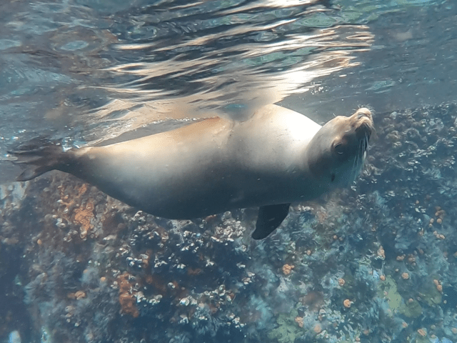 Galapagos Wildlife Bucket List: Sea Lion