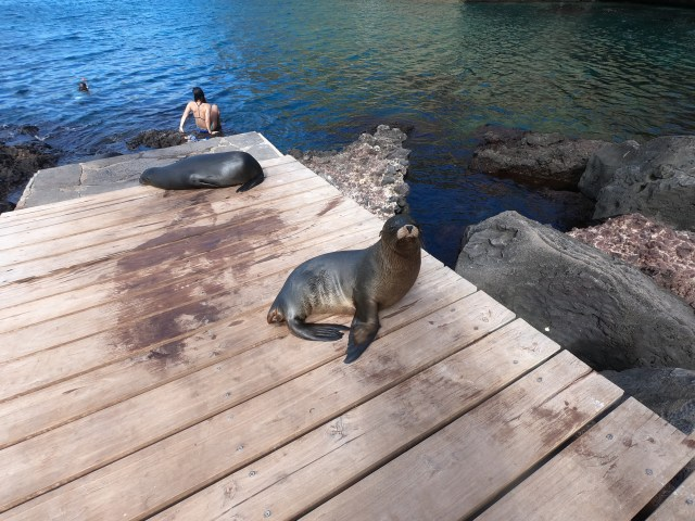 sea lions in san cristobal