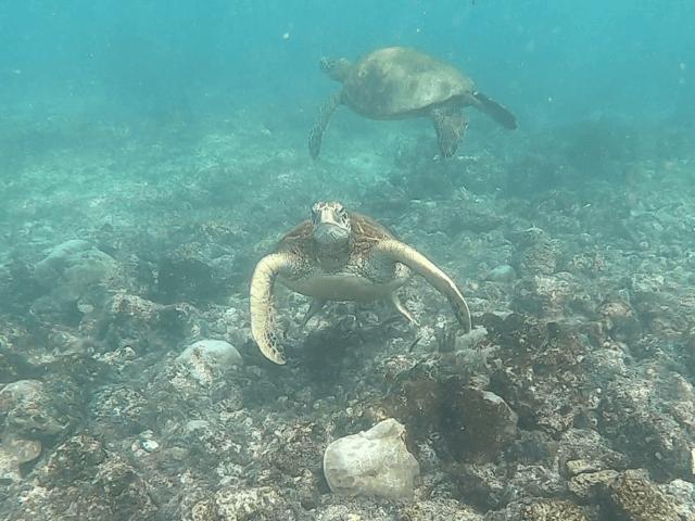 sea turtles_