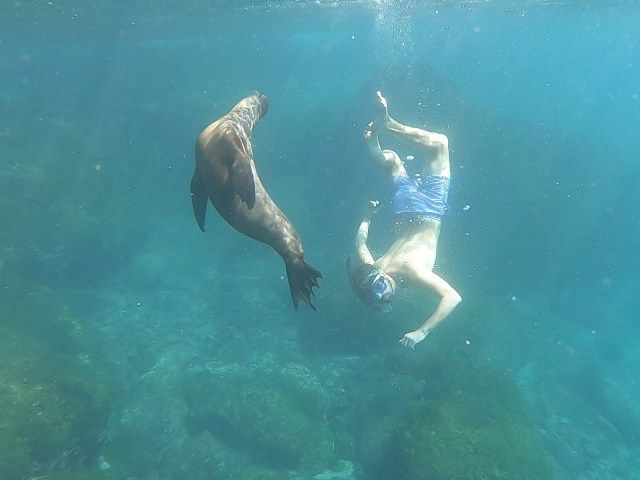 swimming with sealios galapagos