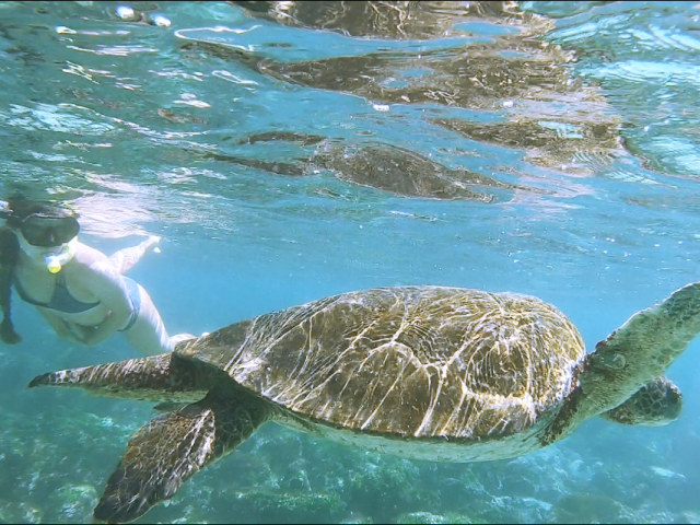 swimming with turtles in galapagos_