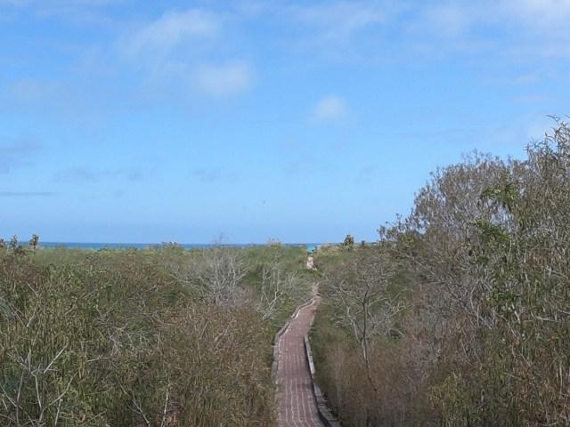tortuga bay trail galapagos