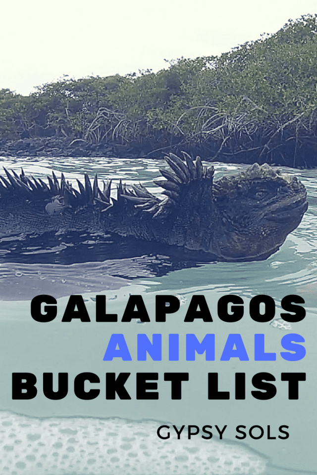 animals Galapagos